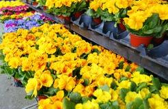 Flores coloridas en un florista Cultivando un huerto, primavera, fondo de la naturaleza Imagen de archivo libre de regalías