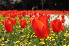 Flores coloridas en un jard?n japon?s en Beppu, Oita imagen de archivo