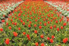 Flores coloridas en un jard?n japon?s en Beppu, Oita imagen de archivo libre de regalías
