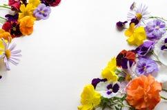 Flores coloridas en una tierra de la parte posterior del blanco Imágenes de archivo libres de regalías