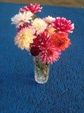 Flores coloridas escogidas frescas Imágenes de archivo libres de regalías