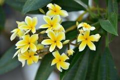 Flores coloridas Grupo de flor grupo de flores blancas amarillas Foto de archivo