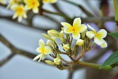 Flores coloridas Grupo de flor grupo de flores blancas amarillas Fotografía de archivo