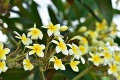Flores coloridas Grupo de flor grupo de flores blancas amarillas Fotografía de archivo libre de regalías