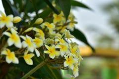 Flores coloridas Grupo de flor grupo de flores blancas amarillas Fotos de archivo libres de regalías
