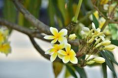 Flores coloridas Grupo de flor grupo de flores blancas amarillas Foto de archivo libre de regalías