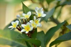 Flores coloridas Grupo de flor grupo de flores blancas amarillas Fotos de archivo