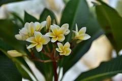 Flores coloridas Grupo de flor grupo de flores blancas amarillas Imagen de archivo libre de regalías