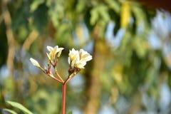 Flores coloridas Grupo de flor grupo de flores blancas amarillas Imágenes de archivo libres de regalías