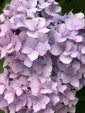 Flores coloridas hermosas Fotografía de archivo