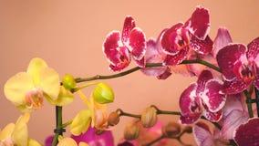 Flores coloridas hermosas en floristería almacen de metraje de vídeo