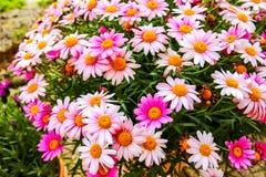 Flores coloridas muito bonitas na mola fotos de stock