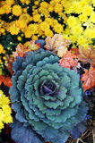 Flores coloridas na flor Imagem de Stock