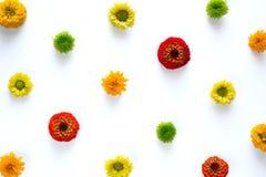 Flores coloridas no fundo branco Imagem de Stock Royalty Free