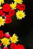 Flores coloridas no fundo preto da água fotos de stock