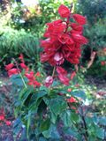 Flores coloridas no jardim Fotografia de Stock Royalty Free