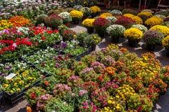 Flores coloridas no mercado Foto de Stock Royalty Free