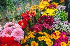 Flores coloridas no mercado da flor Fotografia de Stock