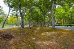 Flores coloridas no parque bonito Foto de Stock Royalty Free