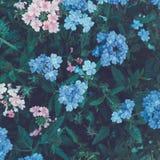 Flores coloridas no parque Paisagem do VERÃO Fotos de Stock