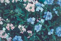 Flores coloridas no parque Paisagem do VERÃO Imagens de Stock