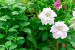 Flores coloridas para que colgante adorne el jardín F hermosa fotos de archivo libres de regalías