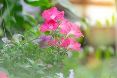 Flores coloridas para que colgante adorne el jardín F hermosa fotografía de archivo libre de regalías