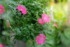 Flores coloridas para que colgante adorne el jardín F hermosa imagenes de archivo
