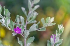 Flores coloridas para que colgante adorne el jardín F hermosa Imágenes de archivo libres de regalías