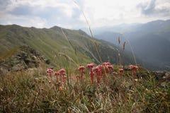 Flores com as montanhas na paisagem do verão do fundo Imagens de Stock Royalty Free