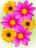 Flores com as pétalas violetas amarelas Foto de Stock Royalty Free