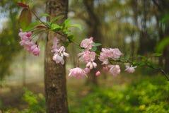 Flores com bokeh imagem de stock
