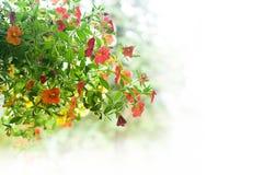 Flores com espaço da cópia Fotos de Stock