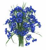 Flores com folhas ilustração stock