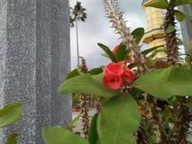 Flores com fundo cravado da haste da construção foto de stock
