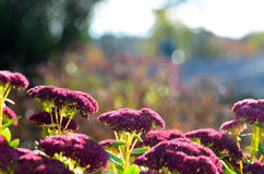 Flores com fundo do bokeh Imagens de Stock