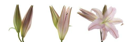 Flores com fundo do inclinação fotografia de stock royalty free