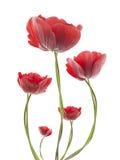 Flores com fundo do inclinação imagem de stock