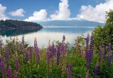 Flores com fundo do lago e das montanhas Foto de Stock