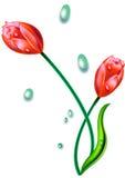 Flores com gotas Fotografia de Stock Royalty Free