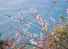 Flores com natureza imagens de stock royalty free