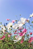 Flores com sorriso Imagem de Stock Royalty Free