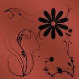 Flores com um fundo da cor Fotos de Stock