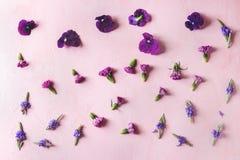 Flores comestibles púrpuras Imagen de archivo libre de regalías
