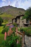 Flores con arquitectura de las montañas en Rhemes Notre Dame, Valle Aosta, Italia Imágenes de archivo libres de regalías