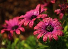 Flores con descensos del agua Fotografía de archivo libre de regalías