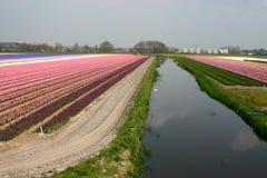 Flores con el canal foto de archivo