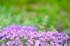 Flores con el foco bajo selectivo. Fotos de archivo libres de regalías