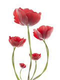 Flores con el fondo del gradiente Imagen de archivo