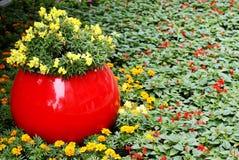 Flores con el macizo de flores de la cama de flor Fotografía de archivo